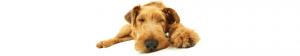Dog-Holidays